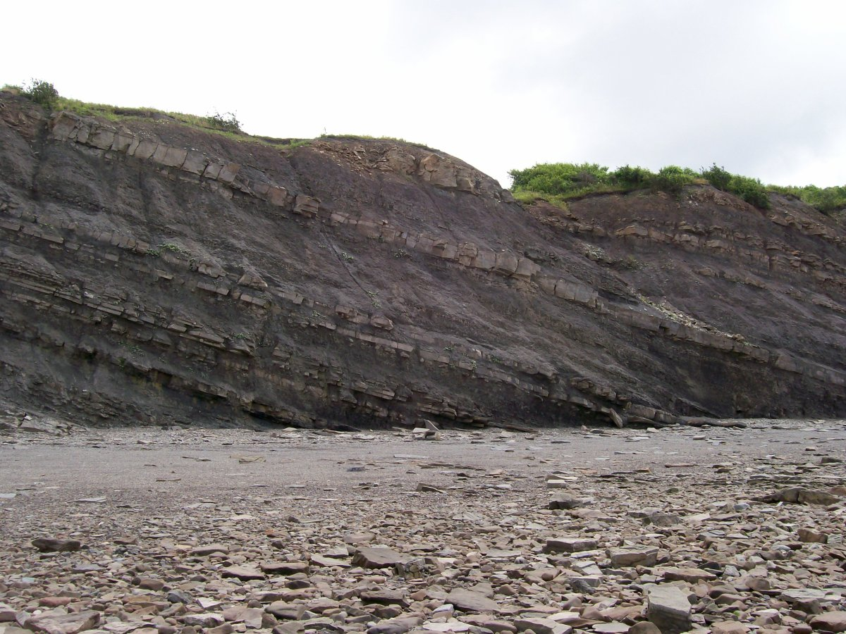 Fossil cliffs in Joggins photo by Emily Sanford